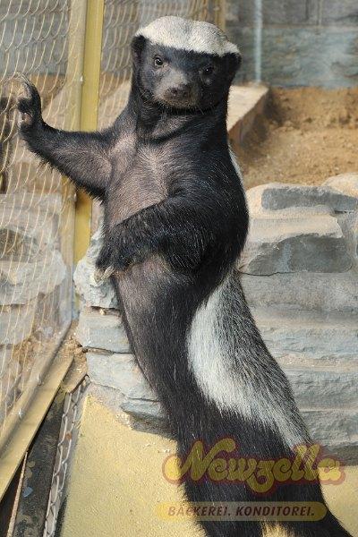 kontakt kölner zoo